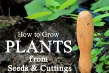 In the Garden - Seeds, Seed Starters & Plant Propagation