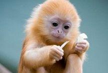 Changos <3 (monkeys) / by Astrid Isamary Aldrete Padilla