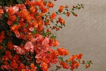 jardin / inspiration from outside / by Don Quade