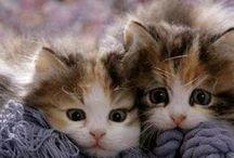 Cats and friends (gatti e amici)