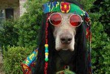 Boho,hippie / by kelly poff