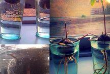 """Mit """"Projekt Krydderurtehave"""" / Min første Krydderurtehave som jeg håber på bliver rigtig godt.. Glæder mig til alle fremskridtene og om mine planter bliver til noget.."""