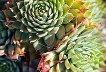 Low Water Garden Ideas