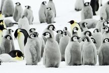 Penguins / by Christy