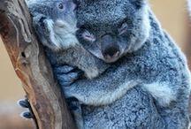Australië / Australië staat bij veel van ons op de bucket list voor een (lange) vakantie. Uitgestrekt en veel verrassende natuur ligt klaar voor een groot avontuur!
