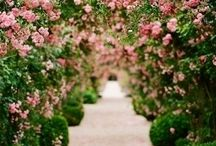 Elisabethan Rose / #Elisabethan Rose #Classic British # Cool #Mysterious #Penhaligon's
