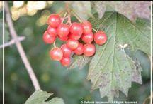 Mabon / WHEEL OF THE YEAR: All things related to Mabon - the Autumn Equinox.   --   JAHRESKREIS: Alles was mit Mabon - dem Herbstäquinox - zusammenhängt.
