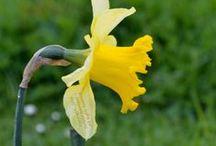 Ostara / WHEEL OF THE YEAR: All things related to Ostara - the Spring Equinox.   --   JAHRESKREIS: Alles was mit Ostara - dem Frühjahrsäquinox - zusammenhängt.