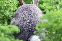 Bunneh =:) / Rabbits and anything to do with them :)
