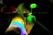 Rainbow/Regenbogen / Somewhere over the rainbow...   --   Irgenwo hinter dem Regenbogen...