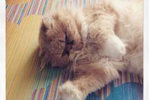 Miciotti !! / Gatti