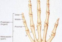 Medicine / Anatomy, injuries, medicine jokes.