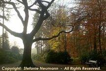 Tree Hugging ♥ Bäume Umarmen / VIRTUAL TREE HUGGING: Trees teach us the connection between earth and heaven. ♥ VIRTUELLES BÄUME-UMARMEN: Bäume lehren uns die Verbindung zwischen Erde und Himmel.