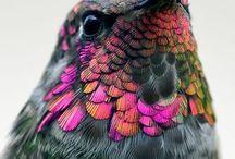Natures Colour Palletes