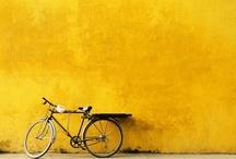 Cetus Loves Yellow