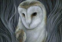 Owl - sova