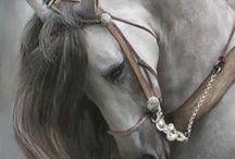 Koňská elegance
