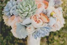 // BLOOMS & SUCCULENTS // / Flowers, succculents, Cactus and blooms