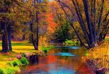 My Favorite Autumn Things / Autumn is a very special time of year!  Everywhere you turn, brilliant reds, oranges, yellows, golds. olives form a colorful backdrop of picturesque Autumn scenes.  Quaint mountain villages with white church steeples, roadside stands brimming with colorful pumpkins and squash, century old mountains they are all what makes Tennessee God's country!  Patches of beautiful fall colors can be found on every hillside during early fall as the trees begin wearing their Autumn attire.  That is what makes Autumn so special to me! / by Cindy Dunn