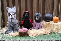 Dog Halloween Costumes / Trick or treat, we've dog costumes for Halloween. Dog Halloween costumes DIY has never been easier and or more tail-wagging fun! From costumes to outfits, ideas and pictures, we've got your dog Halloween costume ideas in the (trick or treat) bag!