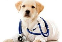 Dog Health / Want to keep your dog in shape with proper health care and dog health tips? From health problems to remedies, medical issues, and how to handle them, people can find it here.