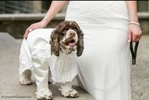 Cocker Spaniels / Are Cocker Spaniels your thing? This board showcases Cocker Spaniel dogs in all their glory. Get your Wigglebutt love on and check these love bugs out!