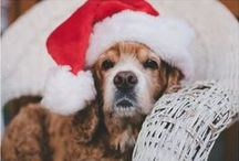 Christmas Dogs / Christmas dog pictures are here! Dogs in clothes wearing cute, funny, and holiday outfits. Celebrate Christmas year round with these dogs in their festive photos.