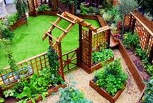 Gardening~ Vegetables / by Stacey Dean