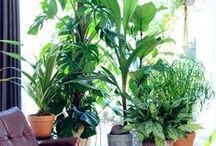 Plants, plants & more plants! / by Erica Geppi