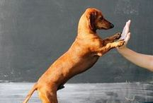 Dog Behavior / Dog behavior and dog training tips and advice is here! Dog problems can be addressed through positive reinforcement and knowing if veterinary help is needed to discover any underlying medical issues.