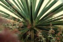 """Mezcalografía / Fotos y """"Wallpapers"""" (Toma los que gustes, son GRATIS) #Mezcal"""