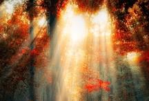 Beautiful Nature / by Sandra Crittenden
