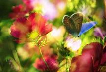 **Nature: Butterflies** / Welcome to Butterflies!! Pin your favorite Butterflies only..please no spam or non-relevant items!!! Thanks for joining!!!