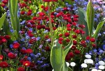 **Gardening: Perennials** / Welcome to Perennials!! Pin your favorite plants or flowers..please no spam or non-relevant items!! Thanks for joining!!! / by MomBHM
