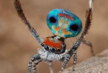 wild life australia