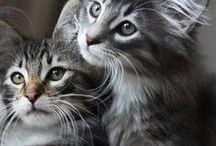 // Cats // / Meow