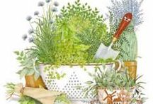 **Cooking With Herbs** / Welcome to Cooking with Herbs!! Pin your favorite herb recipes only..please no spam or non-relevant items!!  Thanks!!!