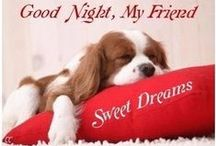 **Good Night Dreams** / Welcome to Goodnight Dreams!! Pin favorite poems or quotes!! Please..no spam or non-relevant items!!! Thanks for joining!!!
