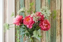 Flowers Everywhere / Beautiful flowers in the forests, gardens, pots, jars, vases, baskets and everywhere