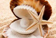 Ocean Ornaments:I / Natural/embellishment of Shells.  / by Parul Shah