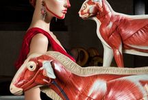 Lucia Giacani Fashion Photographer / Amazing fashion photographer from Milan