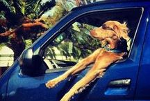 Driving & Travel Trips / Tips to help you on the road - from pet safety tips to photo radar rules!