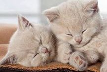 sweet as a hug