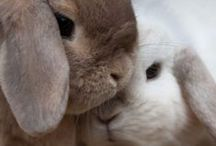 more, more, more bunnies...