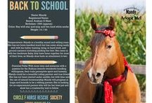 Circle F Horses - Holiday Wishes / The Circle F Horses love to celebrate every holiday, big and small! Please feel free to share their holiday wishes cards of all of our current adoptables! If you have any questions about any of the current adoptables please contact us at: www.circlef.ca