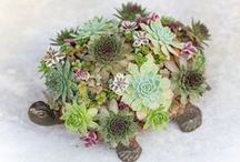 Charming succulents designs / Succulents