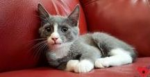 Cat Adoption and Rescue Stories / Heartwarming and sometimes heartbreaking cat adoption and rescue stories.
