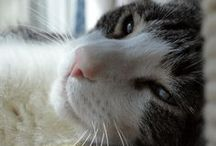 Three Chatty Cats / Blog posts from Three Chatty Cats!