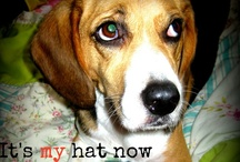 Beagles and other cute things