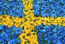 Jag älskar mitt Sverige  / by Kerstin D.
